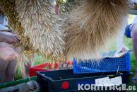 Korntage-2012-0050