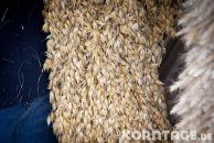 Korntage-2012-0138