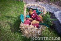 krokau-3314